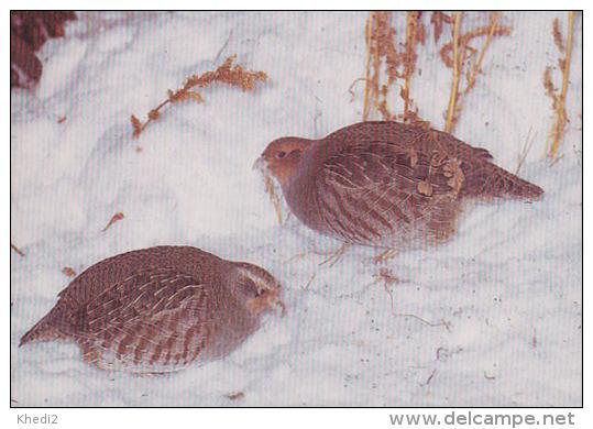 CP Suisse Sempach - Oiseau Chasse - PERDRIX GRISE - PARTRIDGE Bird - REBHUHN Vogel - STARNA Uccello - 178 - Oiseaux