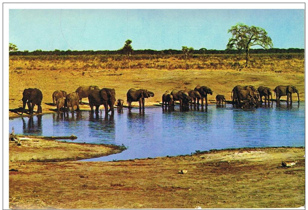 Safari Au Mozanbique - Elefanten