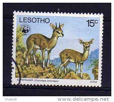 Lesotho - 1977 - 15 Cents Endangered Species/ Klipspringer - Used - Lesotho (1966-...)