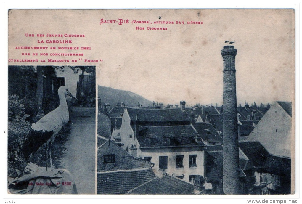 88 SAINT DIE   AVIATION Nos Cigognes  La Caroline Mascotte De L´aviateur Fonck    (897) - Aviateurs