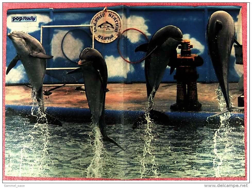 Kleines Musik-Poster  -  Gruppe Speedy  -  Rückseite :  Delphine  -  Von Pop Rocky Ca. 1982 - Plakate & Poster