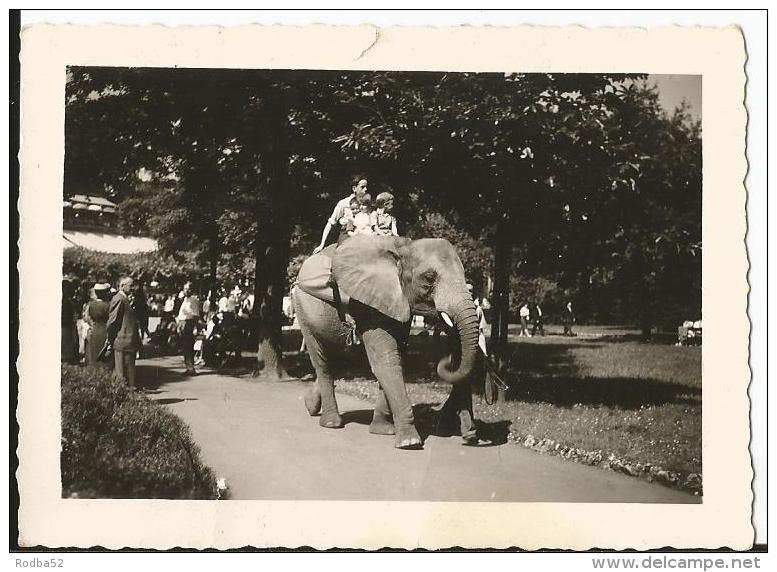 Photo - Personnes à Dos D'un éléphant - - Photos