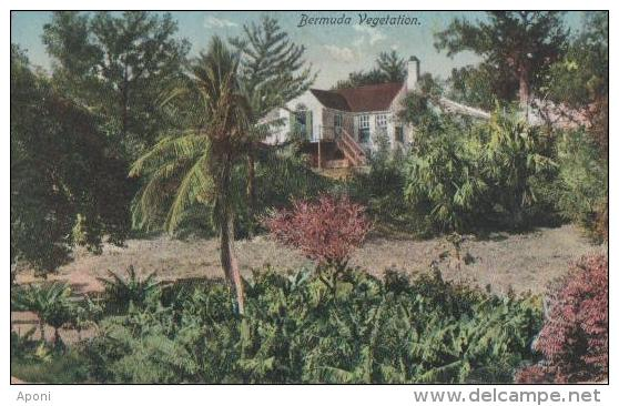 BERMUDES ( Vegetation ) - Bermudes