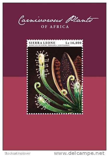 Sierra Leone-2013-Flora-CARNIVOR OUS PLANTS OF AFRICA - Sukkulenten