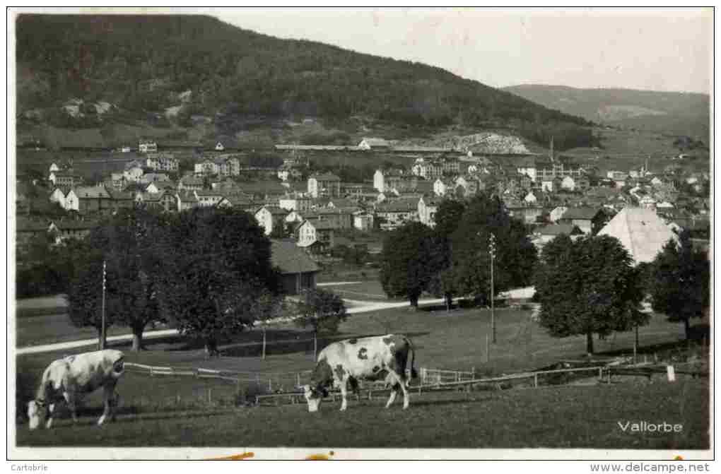 SUISSE-Vallorbe-1932 -Vaches - Suisse