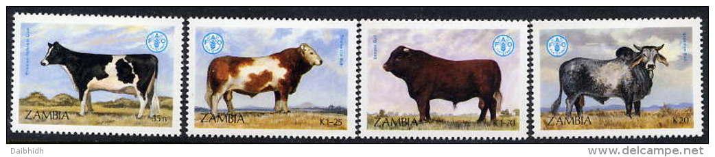 ZAMBIA 1987 FAO Anniversary: Cattle Set Of 4 Values MNH / **... SG 528-31 - Zambia (1965-...)