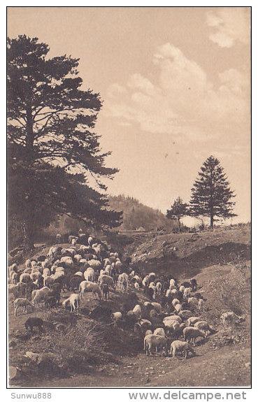 Troupeau De Moutons  (Brunner & C) - Animals