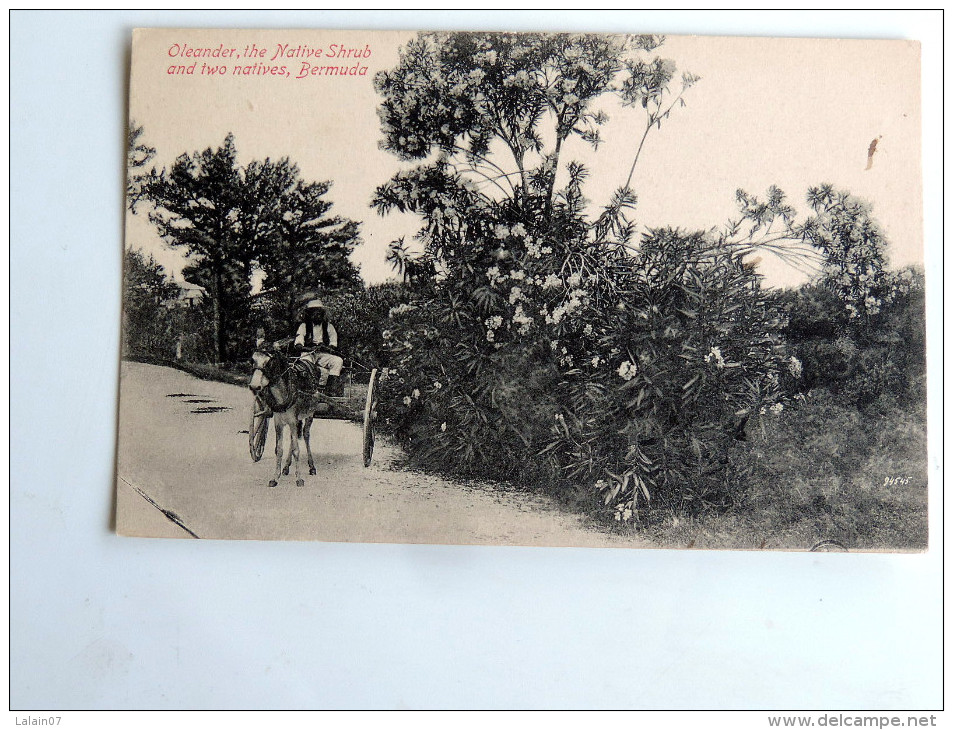 Carte Postale Ancienne : BERMUDA : Oleander , The Native Shrub And Two Natives - Bermudes
