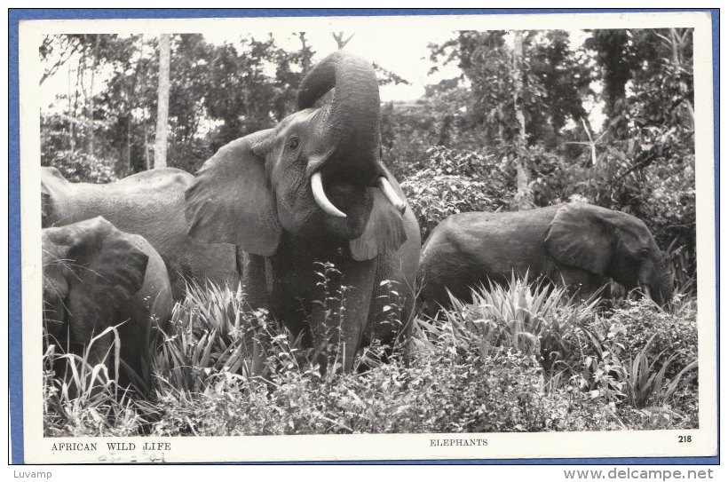 ANIMALI Della SAVANA -AFRICA - F/P B/N Lucido  -   Elefanti (11 1110) - Elephants