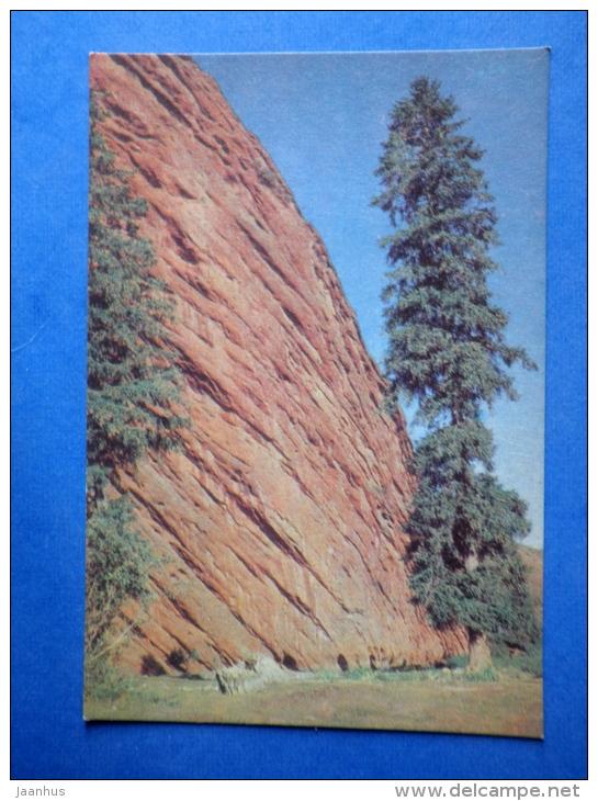 Tian Shan Spruce - Picea Schrenkiana Ssp. Tianschanica - Tree - Nature Of Kyrgyzstan - 1969 - Kyrgyzstan USSR - Unused - Kirghizistan