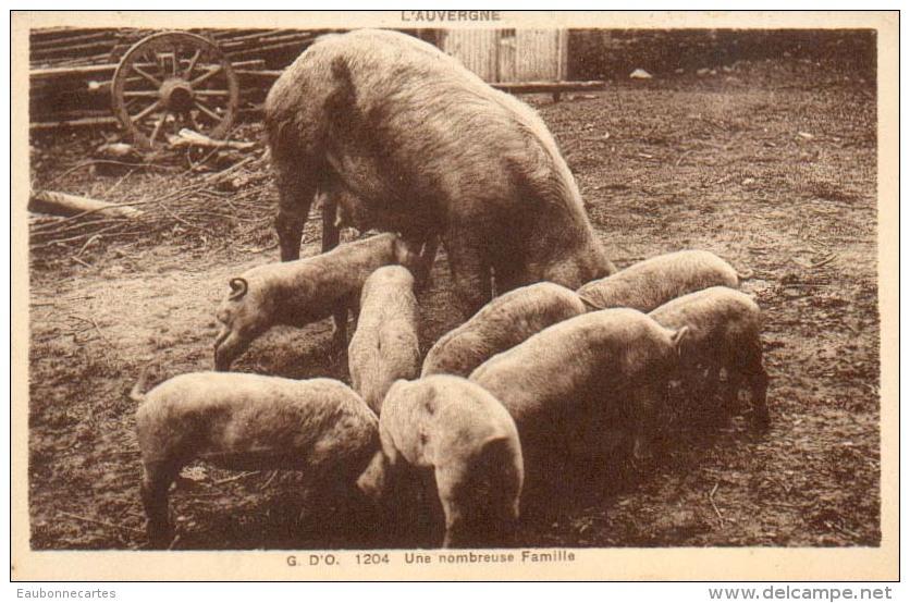 COCHON - L´Auvergne - Une Nombreuse Famille - Cochons