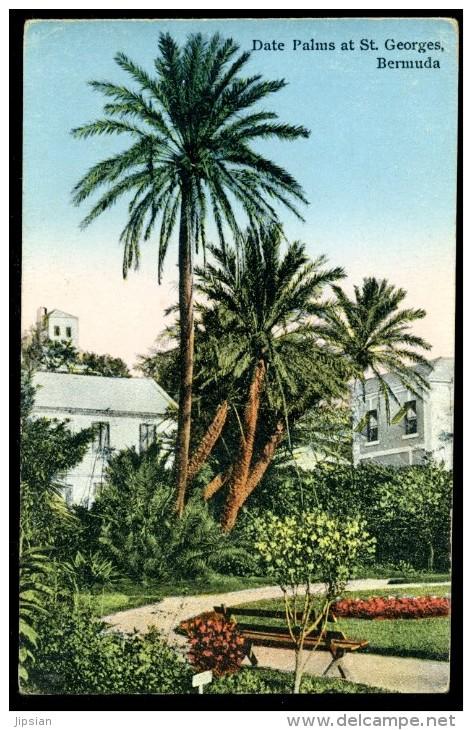 Cpa îles Des Bermudes Bermuda Date Palms At St Georges Bermuda BOR15 - Bermudes