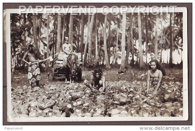 Tahiti   Harvesting Cocoanuts RP  Ti94 - Cartes Postales