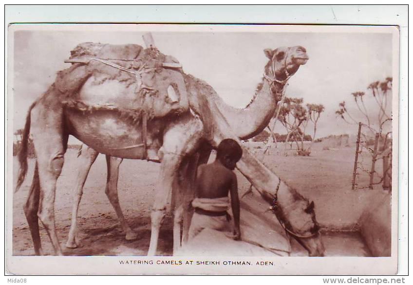 WATERING CAMELS AT SHEIKH OTHMAN . ADEN. ENFANT . DROMADAIRES. PHOTO A . ABASSI STUDIO .ADEN - Cartes Postales