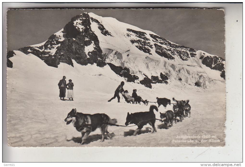 HUNDE - Schlittenhunde / Polarhunde, Jungfraujoch / CH, 1931 - Hunde