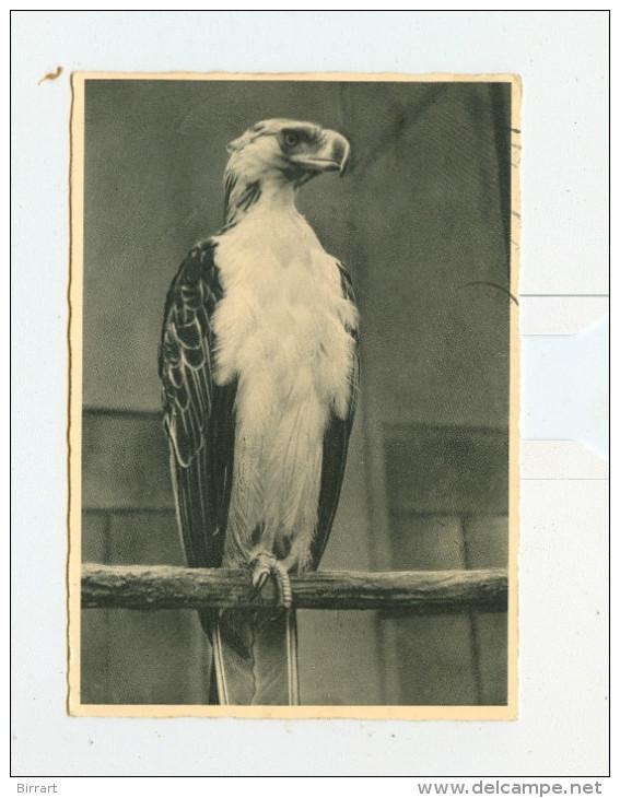 Giardino Zoologico-ROMA,Aquila Delle Scimmie-1959 - Roma