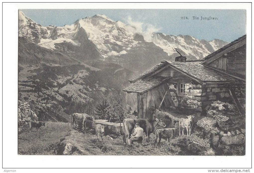 L1669 -  Die Jungfrau Chalet Et Vaches - BE Berne