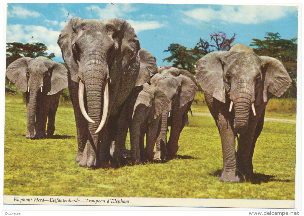 AFRICA, ZAMBIA, Elephant Herd, By John Hinde, 1977, Train, Stamp,old Photo Postcard - Zambia