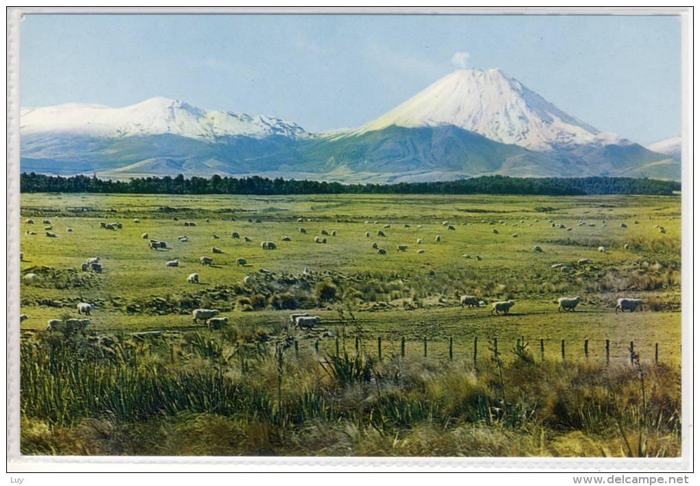 NEW ZEALAND -    TONGARIRO NATIONAL PARK AND MT. NGAURUHOE Vulcano - Grazing Sheep - New Zealand