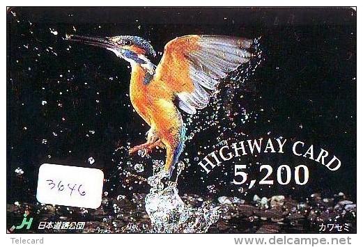 Telecarte Japon OISEAU (3646) MARTIN PECHEUR * KINGFISHER  * Phonecard Japan * BIRD * TK EISVOGEL - Birds