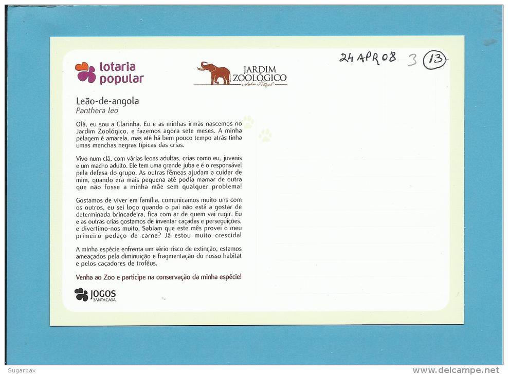 Leão-de-angola ( Panthera Leo ) Lion - Crias Do Jardim Zoológico - Lisbon ZOO Lisboa - Portugal - Lions