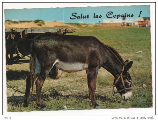 """FRANCE - Âne.  """"Salut Les Copains""""  ! - Asino"""