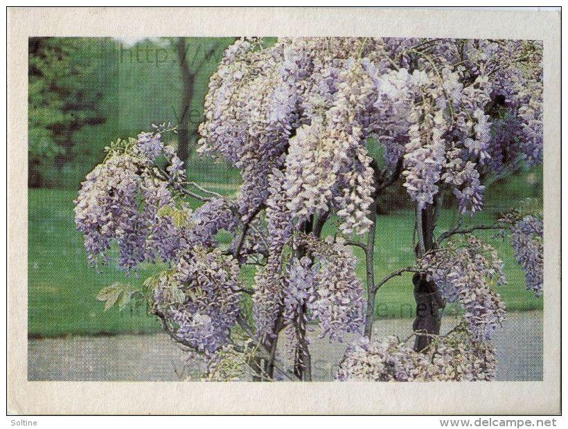 Image Photo De Fleur : La Glycine - Autres