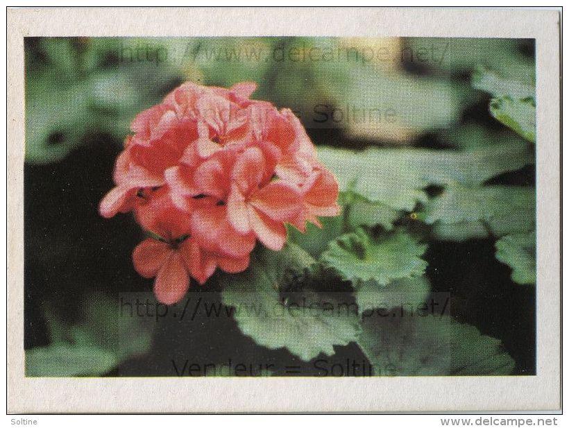 Image Photo De Fleur : Géranium - Chromos