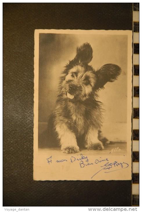 CP, Animaux, Chiens Chien Race A Identifier Terrier ? - Chiens