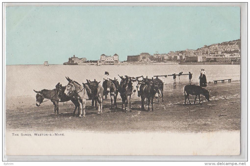 WESTON-SUPER-MARE - THE SANDS - DONKEY - ÂNE - PIONNIERE - EARLY RPPC - Weston-Super-Mare