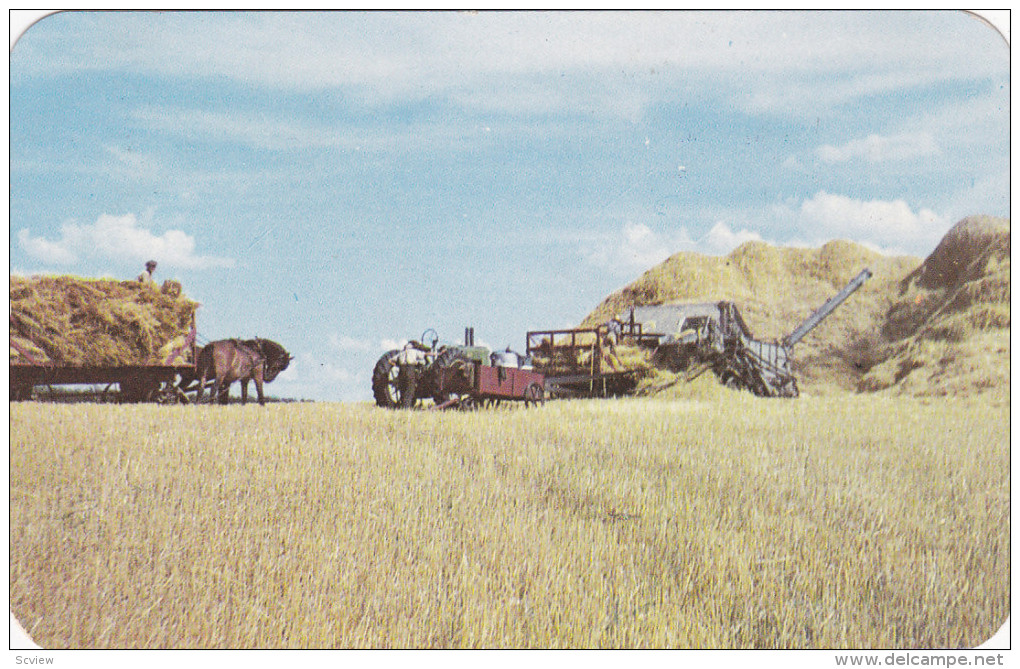 Typical Western Canada Threshing Scene, Greetings From WASKADA, Manitoba, Canada, PU-1954 - Manitoba