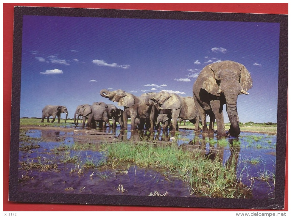 TZ-14  Eléphants, Elephant Herd Drinking Etosha Namibia - Namibia