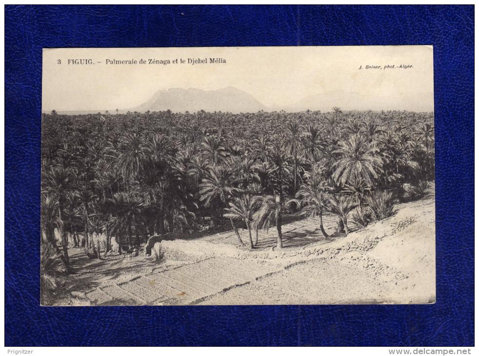 Algerien / Algérie      Figuig        Palmeraie De Zenaga Et Le Djebel Melia - Algeria