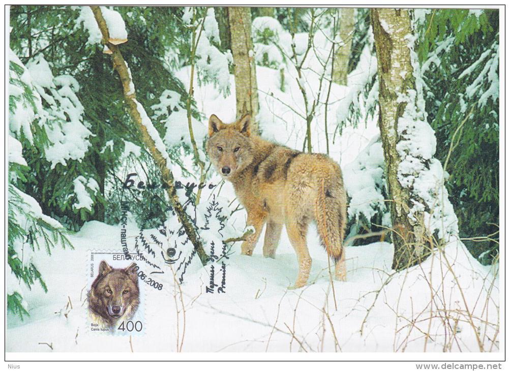 Belarus 2008 Card Maximum Fauna Wolf Dog Dogs Canis Lupus - Belarus