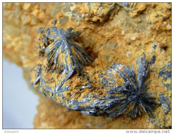 STIBINE EN EVENTAIL SUR QUARTZ MAMELONNE  8 X 8, CM MINE DE LA FORGE - Mineralien