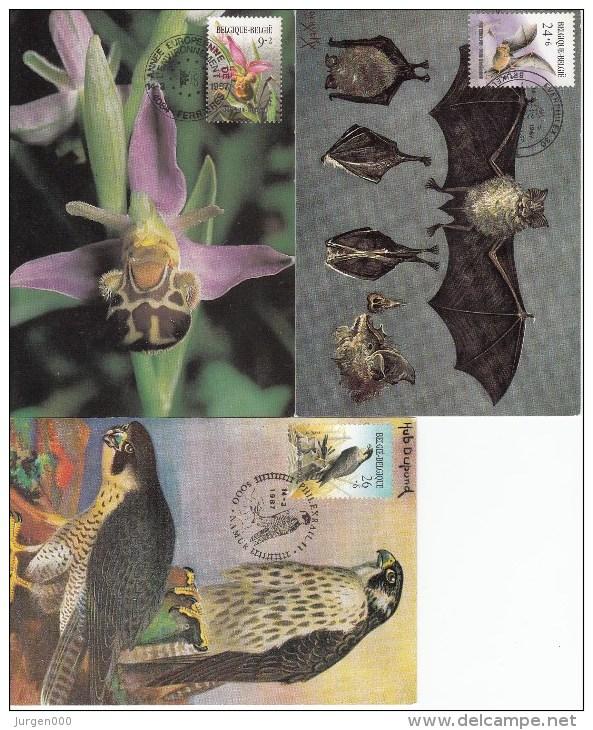 België, Maximumkaarten, Nr 2244/2246 (6295) - Orchidées