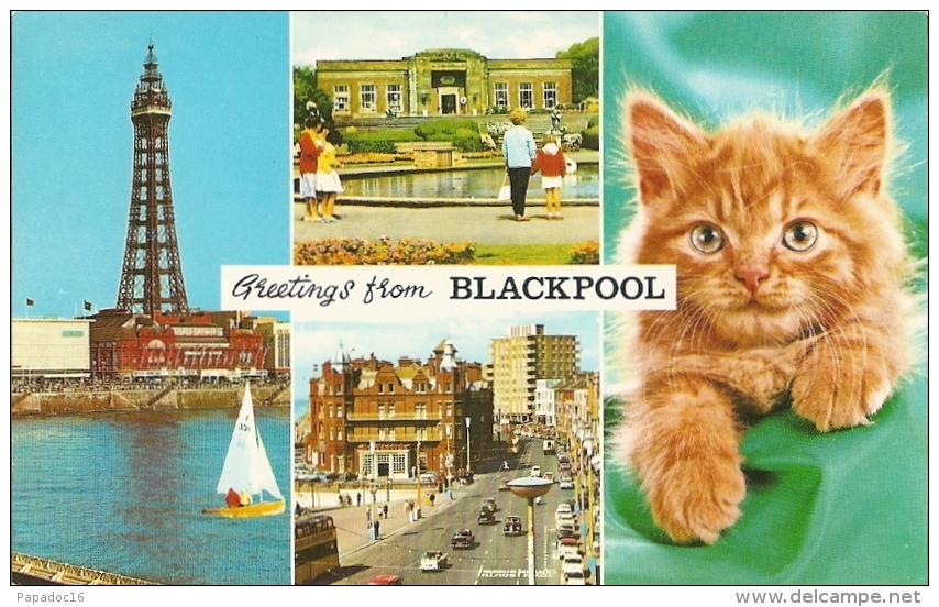 GB - La - Greetings From Blackpool - Multiview : Tower, Stanley Park, Princess Parade + Cat (n° BL 22 A)- [chat - Katze] - Blackpool