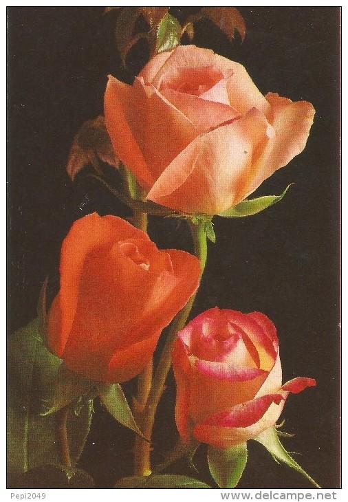 PP792 - POSTAL - BONITAS ROSAS - Flores, Plantas & Arboles