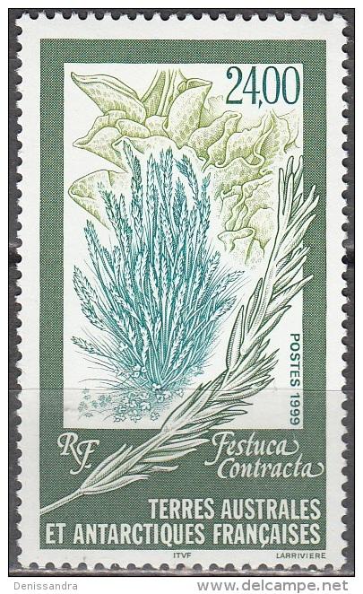 TAAF 1999 Yvert 244 Neuf ** Cote (2015) 12.00 Euro Flore Festuca Contracta - Terres Australes Et Antarctiques Françaises (TAAF)