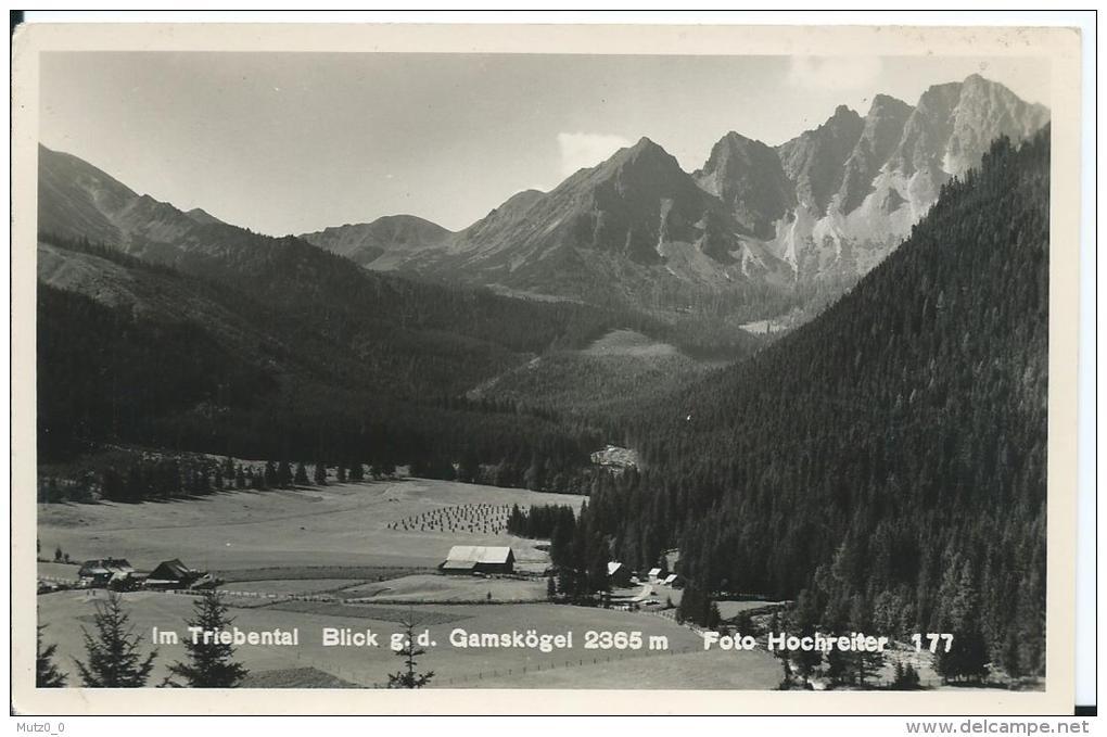 AK 0146  Im Triebental - Blick Gegen Die Gamskögel / Foto Hochreiter Um 1930-50 - Rottenmann