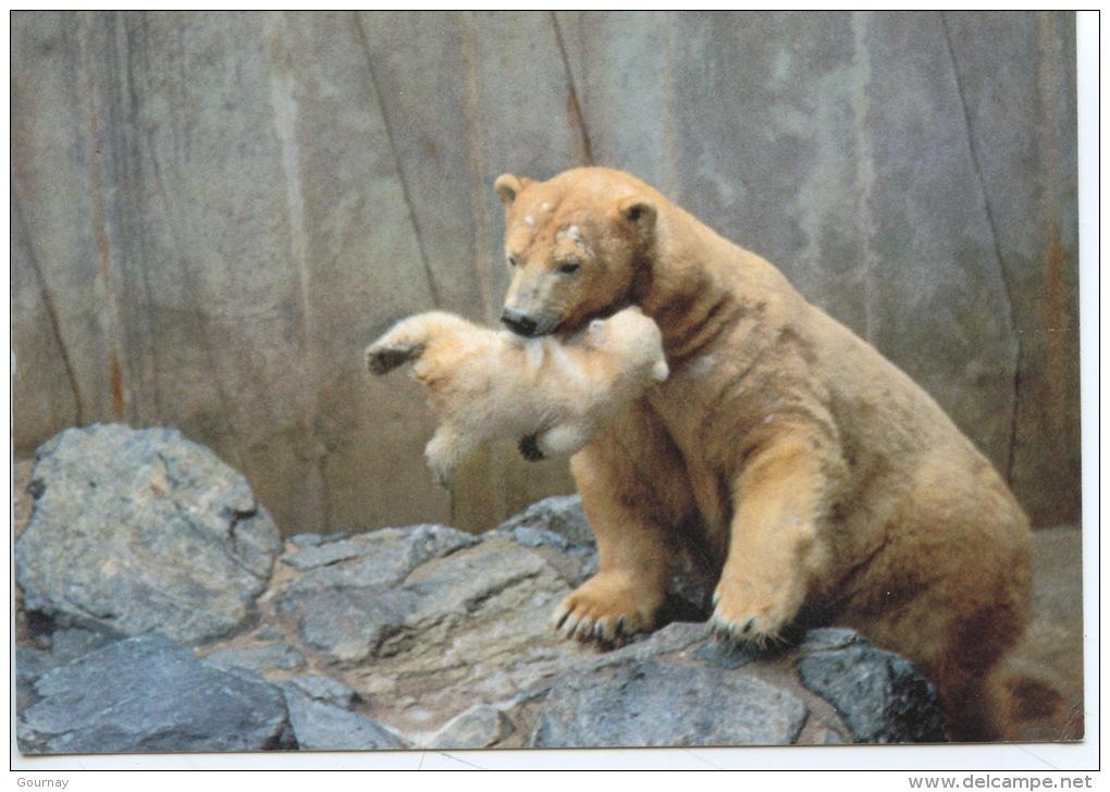 Royan Zoo De La Palmyre : Femelle Ours Blanc Tenant Dans Sa Gueule Son Bébé (n°19 Zoo) Ursidé - Ours