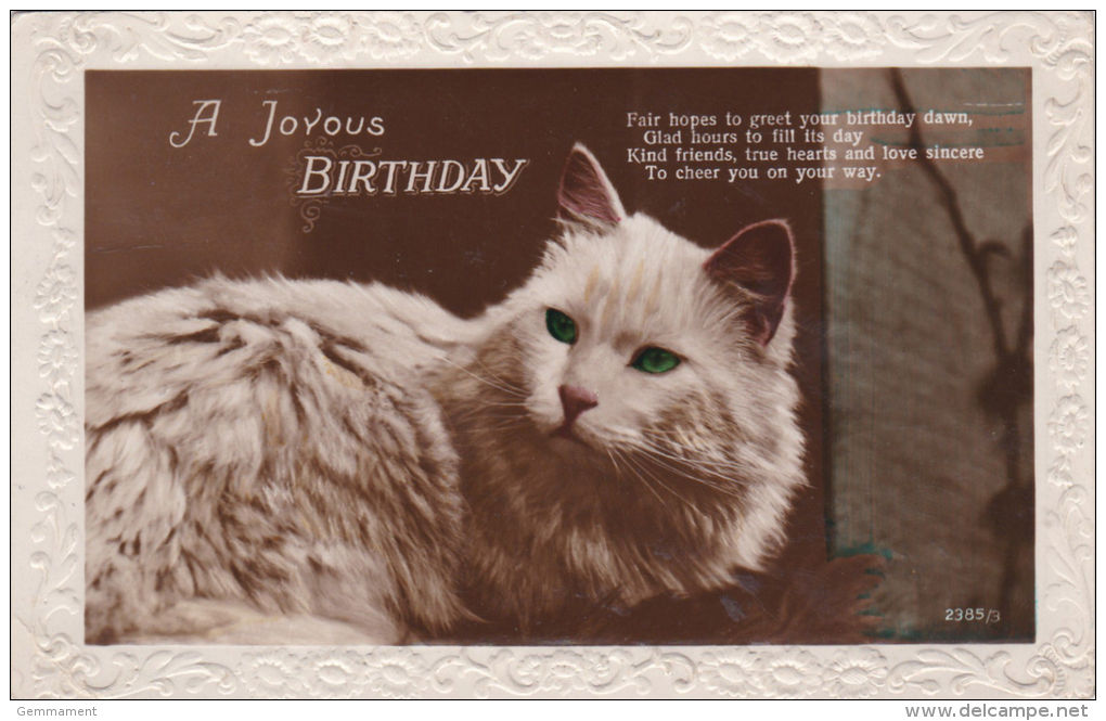 CAT POSTCARD.  BIRTHDAY CARD - Katten