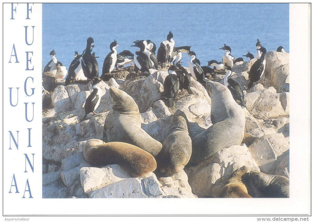 USHUAIA - SEA LIONS AND CORMORANTS - CPSM EDICIONES EL VIEJO LOBO DE MAR FOTO EDUARDO POCAI VOYAGEE ECRITE AU DOS RARE - Argentina