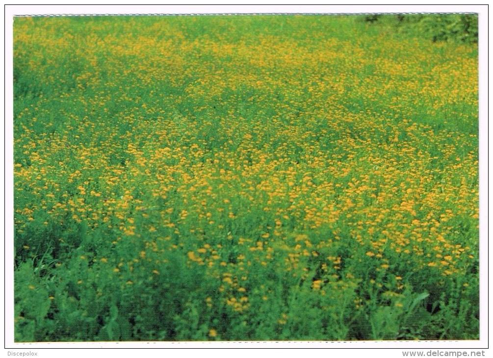 H3368 Val Trebbia (Piacenza) - Paesaggio - Fiori Di Primavera / Non Viaggiata - Autres Villes