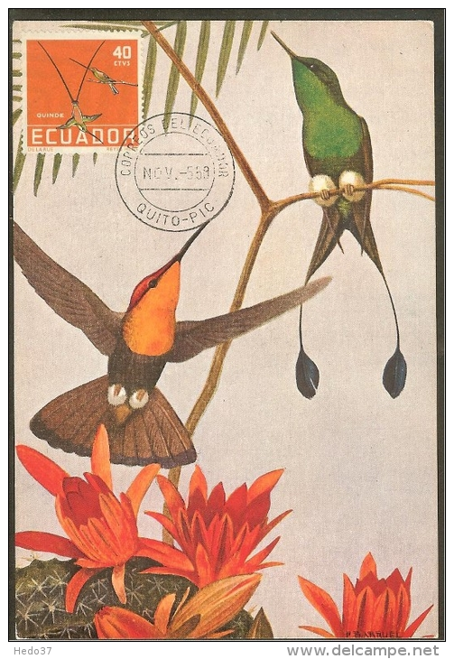 EQUATEUR Carte Maximum - Colibri - Equateur