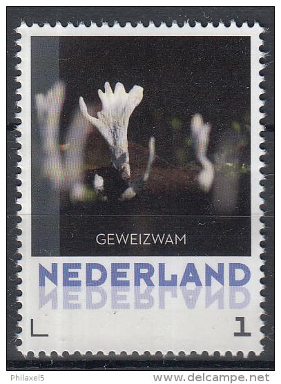 Nederland - 8 September 2015 - Paddestoelen/Pfilzen/Mushrooms - Geweizwam - MNH - Pilze