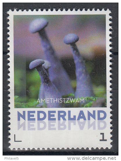 Nederland - 8 September 2015 - Paddestoelen/Pfilzen/Mushrooms - Amethistzwam - MNH - Pilze