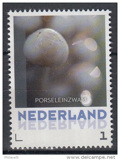 Nederland - 8 September 2015 - Paddestoelen/Pfilzen/Mushrooms - Porseleinzwam - MNH - Pilze