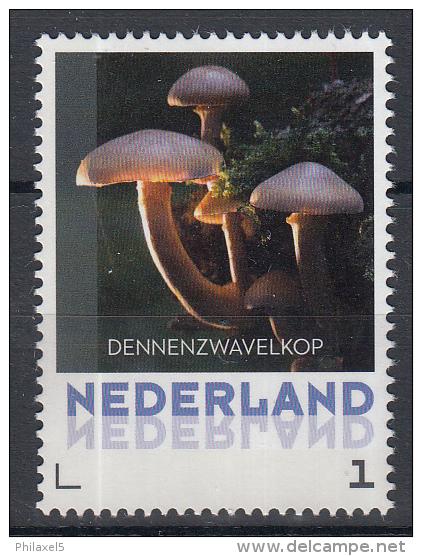 Nederland - 8 September 2015 - Paddestoelen/Pfilzen/Mushrooms - Dennenzwavelkop - MNH - Pilze