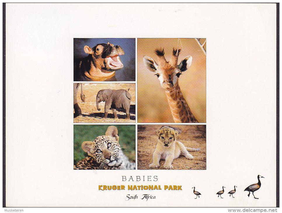 South Africa PPC Babies Kruger National Park Hippo Elephant Giraf Jaguar Lion 2004 GREVE Denmark (2 Scans) - Südafrika